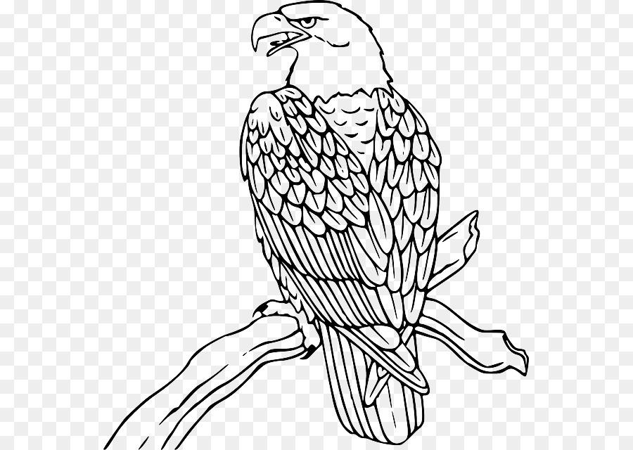 bald eagle philippine eagle clip art outline of eagle