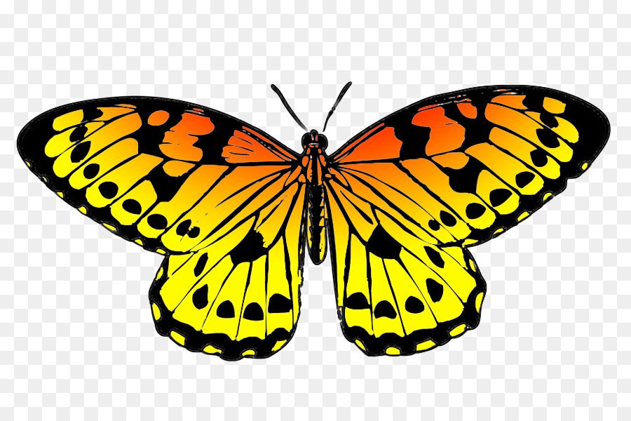 monarch butterfly drawing black clip art yellow butterfly cliparts rh kisspng com free animated monarch butterfly clipart monarch butterfly clip art free