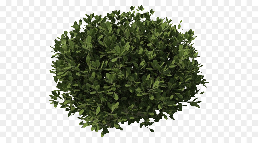 Tree Bushes Plants Png Png