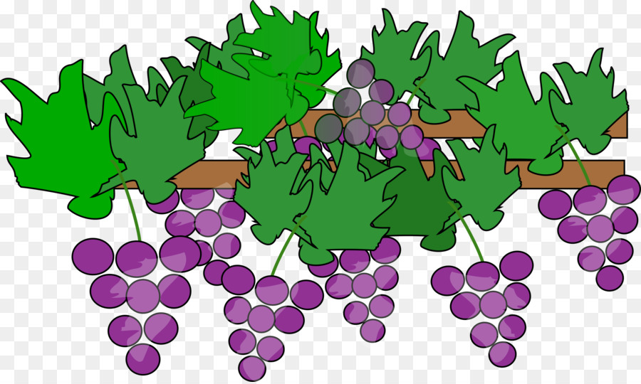 red wine common grape vine clip art growing family cliparts png rh kisspng com grape vine clip art free grape vine border clip art free