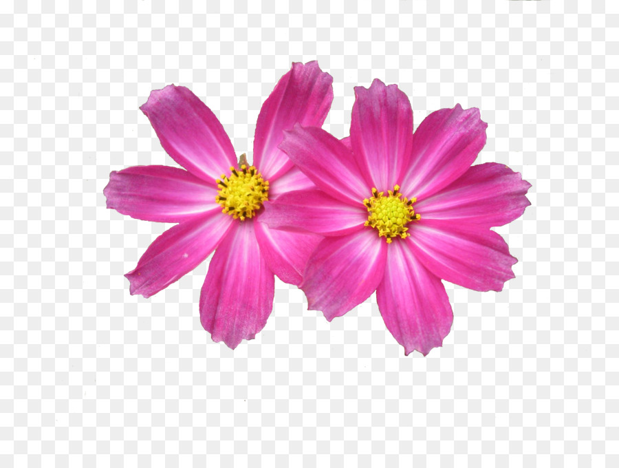 flower display resolution clip art free download flower