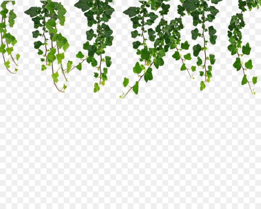 vine ivy clip art ivy hanging vines png png download 999 799 rh kisspng com vine clip art border free wine clipart
