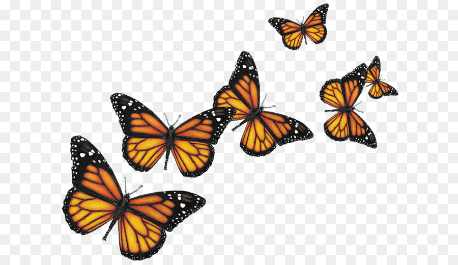 butterfly insect computer icons butterflies png png Free Clip Art Welcome Sign Free Welcome Back Clip Art