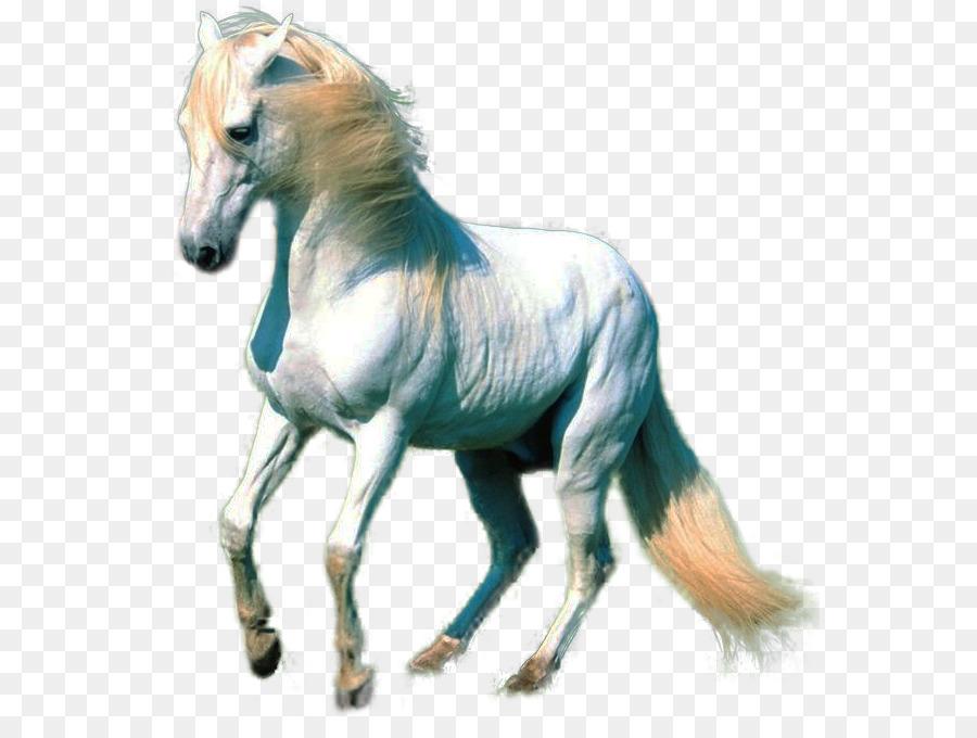 American Paint Horse Akhal Teke White