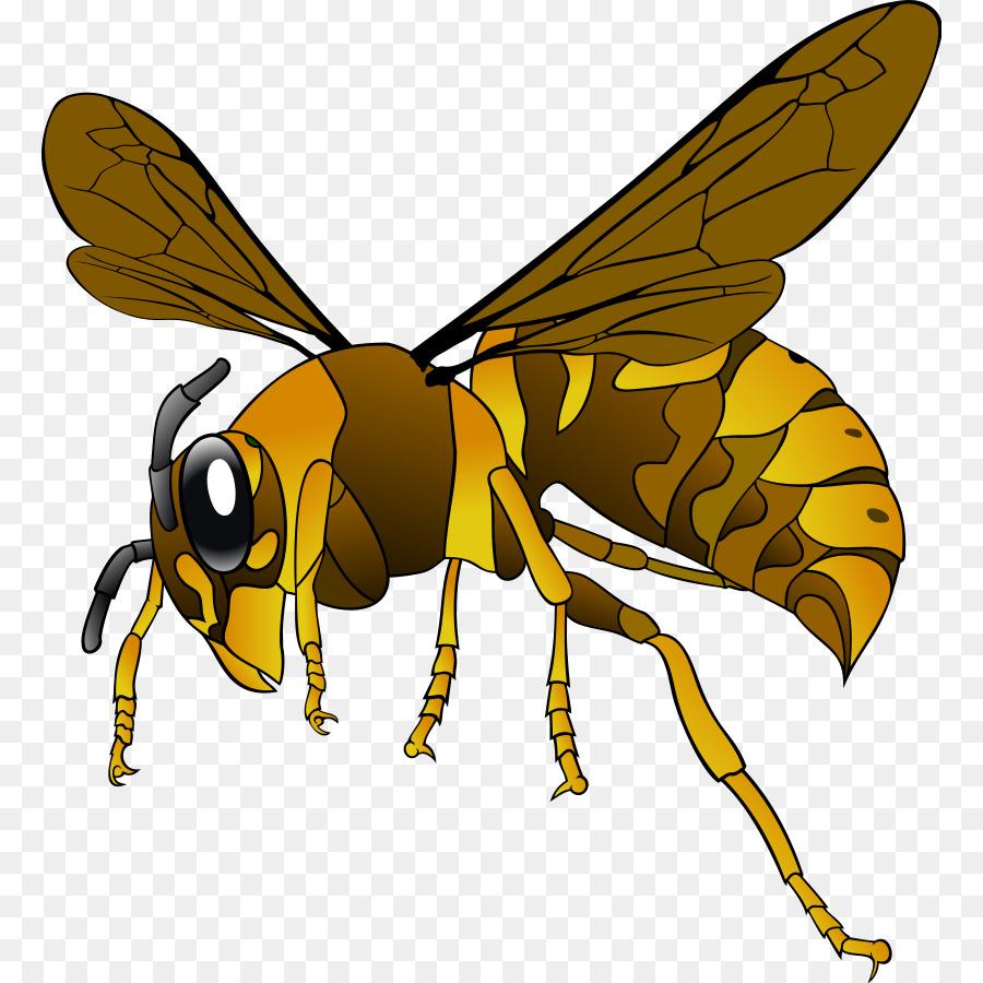 vespa simillima bee insect european hornet clip art hornet clipart rh kisspng com hornet clip ons hornet clipart free