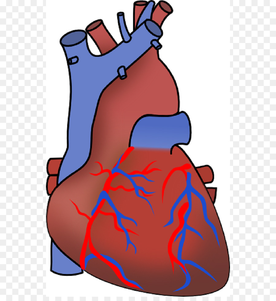 Myocardial infarction heart failure cardiovascular disease clip art myocardial infarction heart failure cardiovascular disease clip art heart diagram unlabeled ccuart Image collections