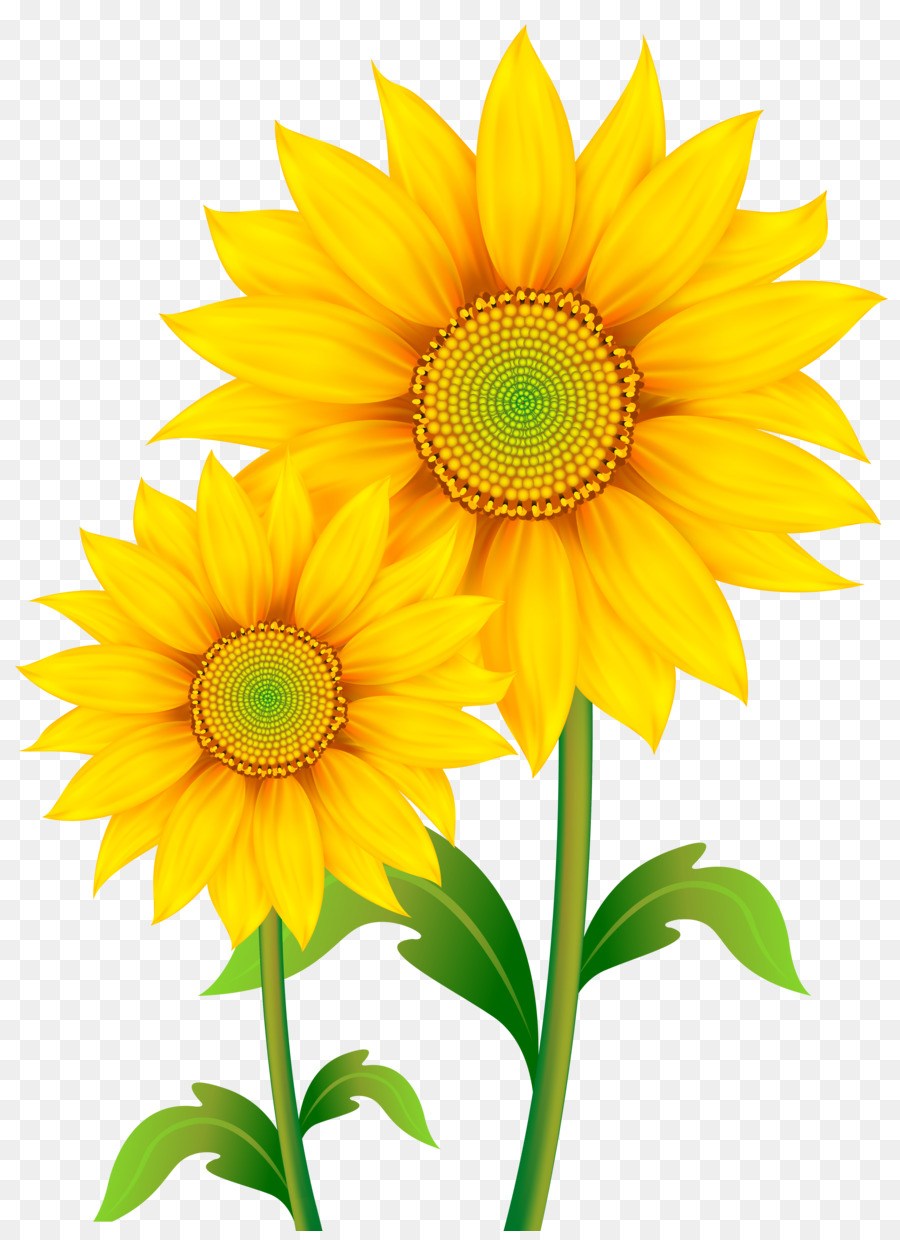 Common Sunflower Drawing Download Clip Art Fall Sunflower Cliparts
