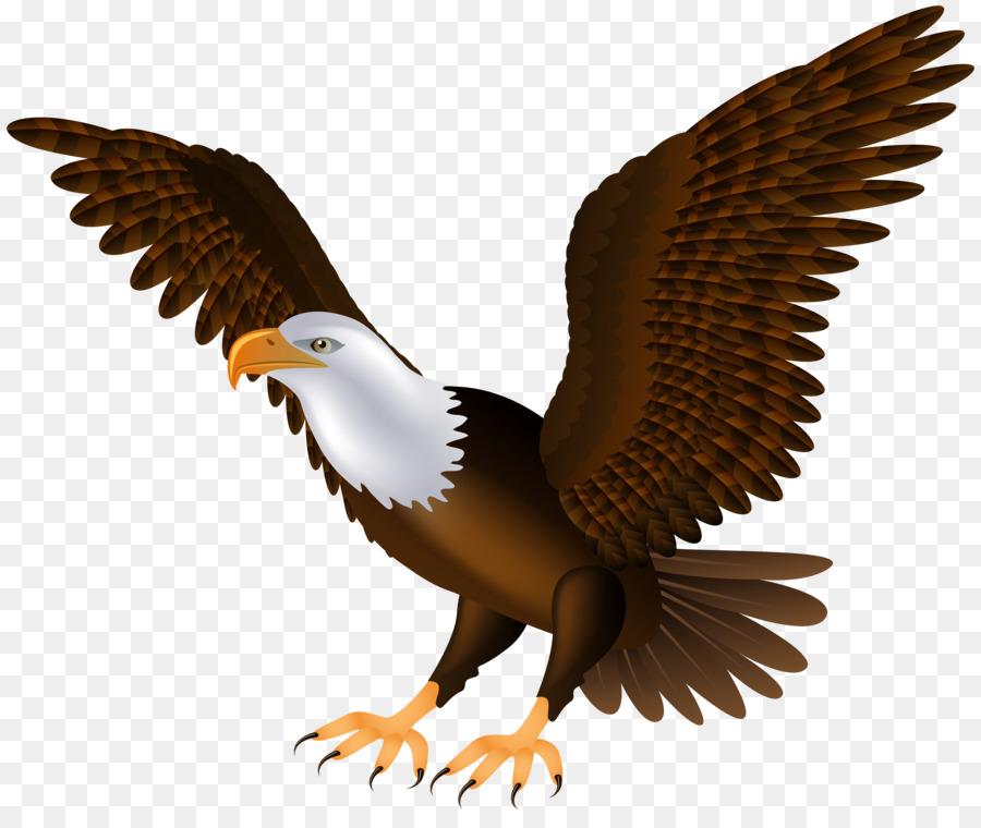 bald eagle bird clip art eagle png download 8000 6651 free rh kisspng com bald eagle clip art black and white bald eagle clipart logo