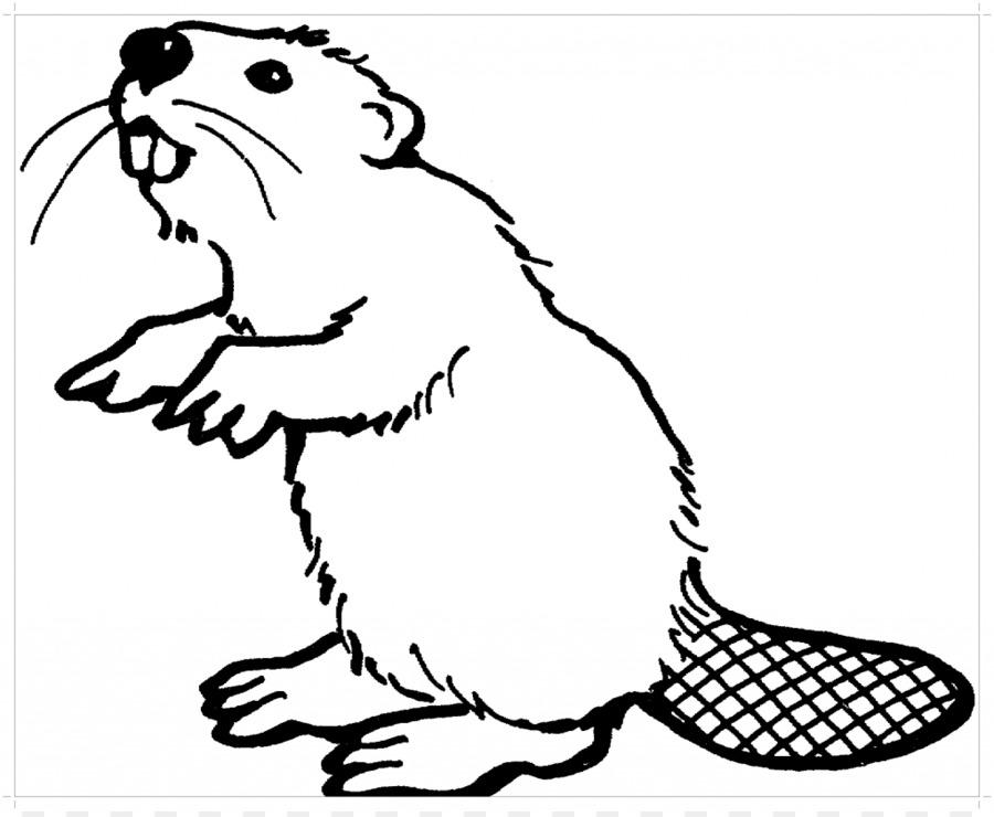 Amerika Utara Berang Berang Buku Mewarnai Felidae Tikus Castoroides