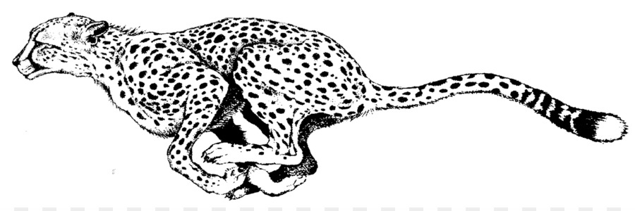 South African Cheetah Coloring Book Leopard Adult Child