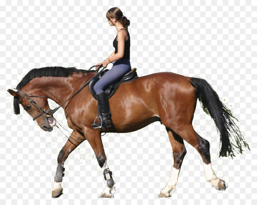 Colorado Ranger Pony Ecuestre Férula botas Estable - caballo ...
