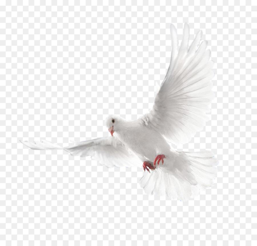 Columbidae Holy Spirit Doves As Symbols Pigeon Png Download 2128