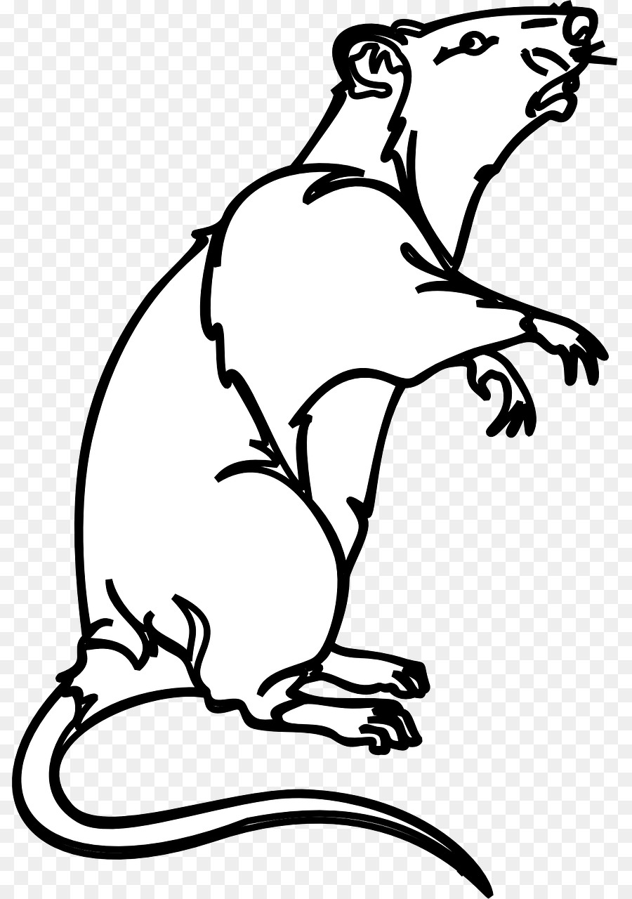 black rat laboratory rat mouse bonthain rat clip art ferret png rh kisspng com black footed ferret clipart