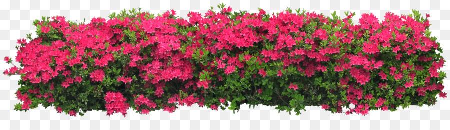 Arbustos Con Flor Arbusto Arbol De Flor Los Arbustos Png Dibujo - Arbustos-de-flor