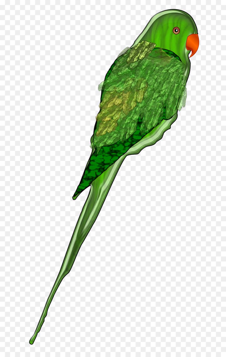 parrot bird budgerigar parakeet clip art parrot png download rh kisspng com  parakeet clipart