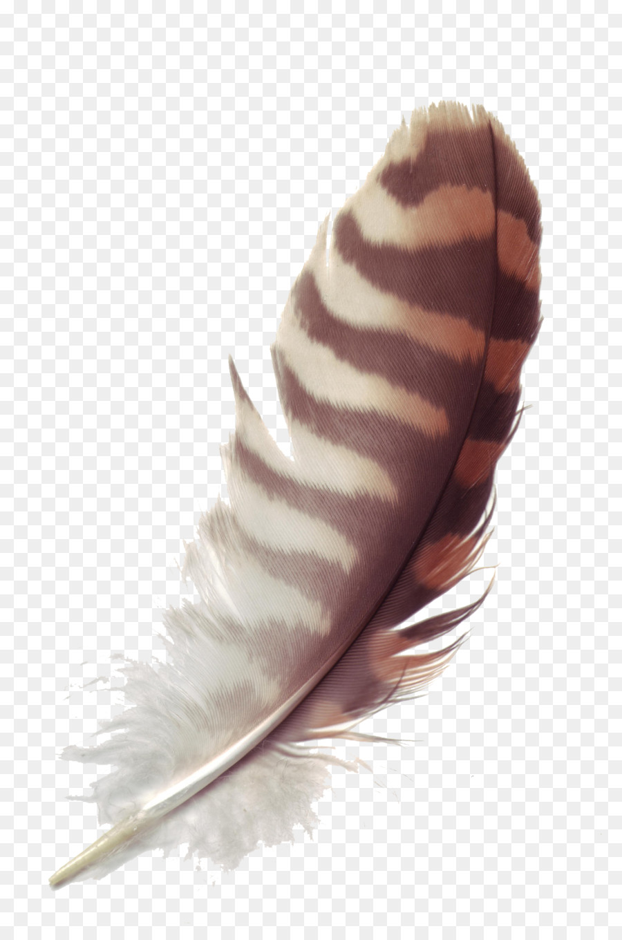 Munich Fabric Start Fashion Forecasting Color Feather Feather Png