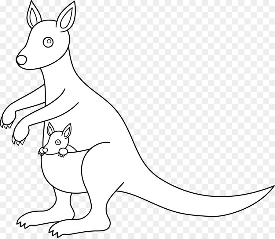 Red Kangaroo Eastern Grey Kangaroo Antilopine Kangaroo Western Grey