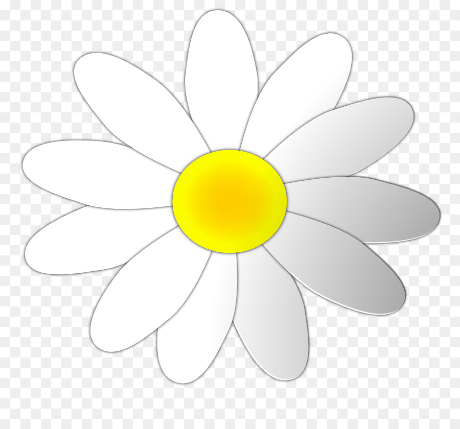 Flower outline daisy. Circle png download free