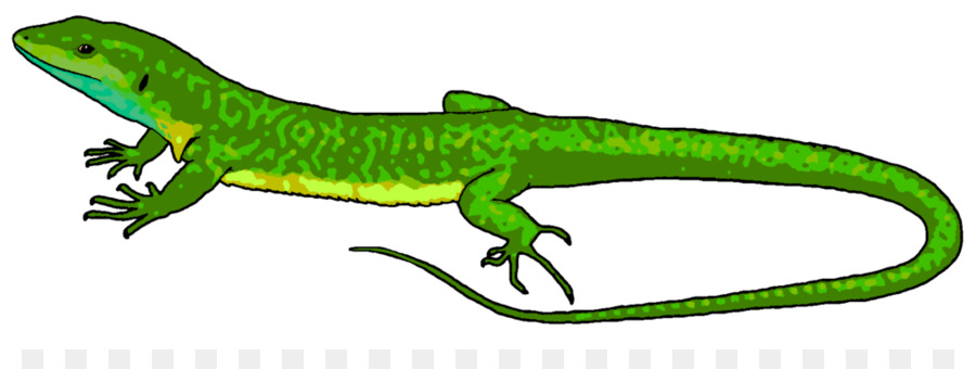 lizard chameleons reptile common iguanas clip art lizard cliparts rh kisspng com lizard clipart images lizards clip art