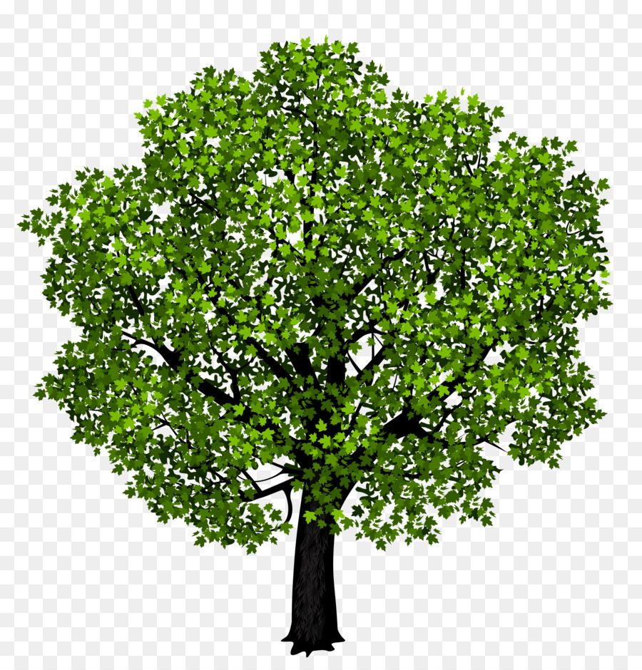Red maple Japanese maple Tree Clip art - tree png download - 5140 ...