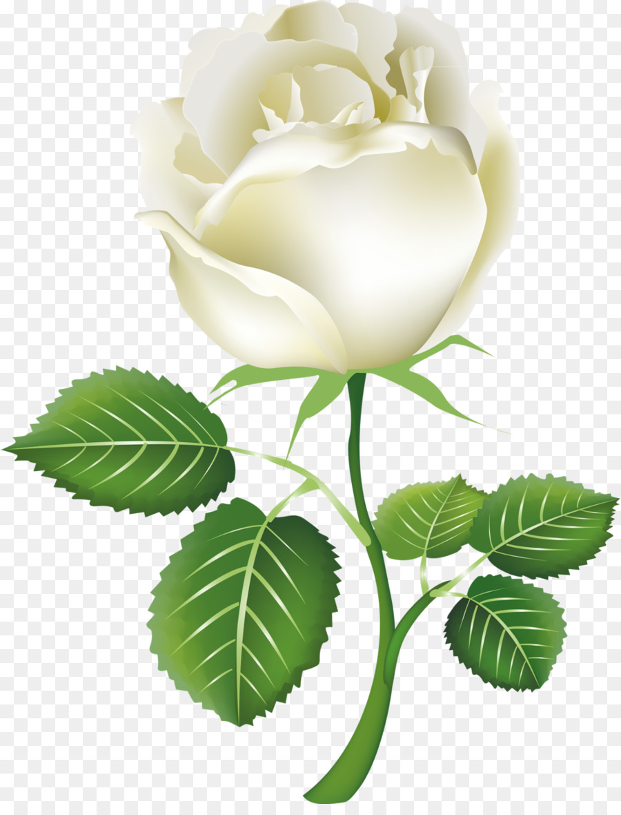 rose white clip art white roses png download 990 1280 free rh kisspng com white rose clipart free white rose pictures clip art