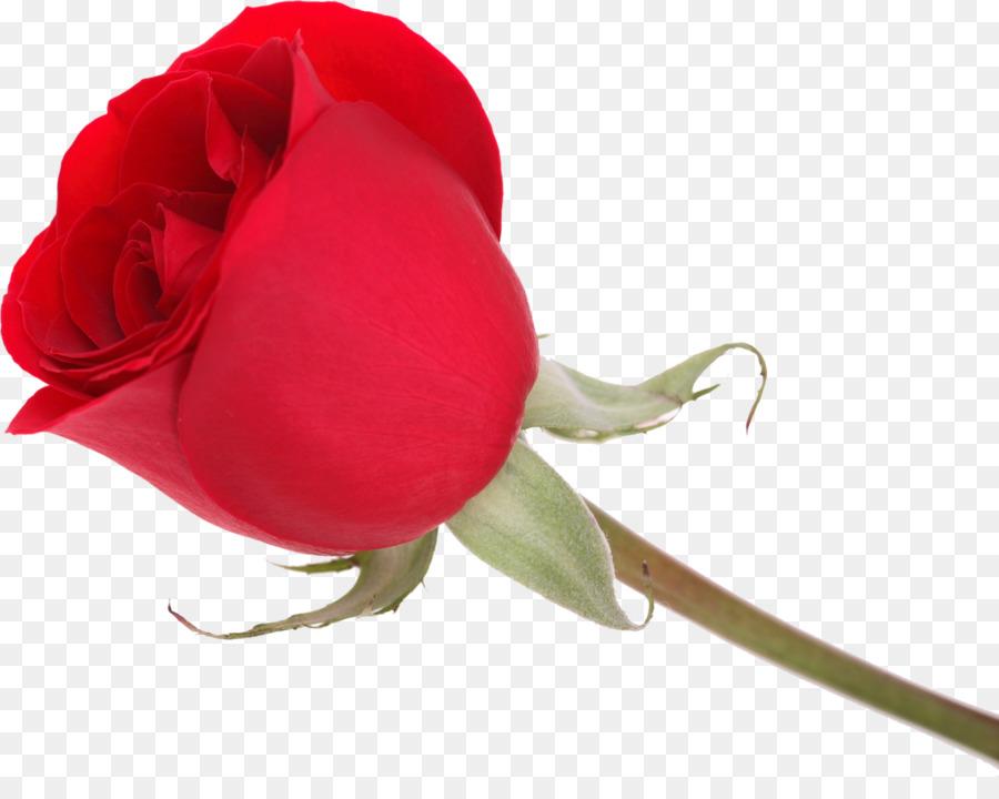 Valentines Day Love Garden Roses Message Vinegar Valentines Rose