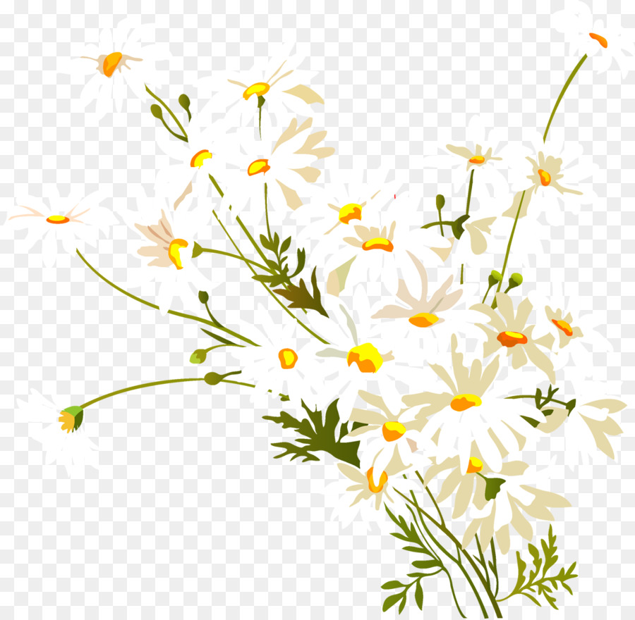 Flower common daisy watercolor painting clip art camomile png flower common daisy watercolor painting clip art camomile izmirmasajfo