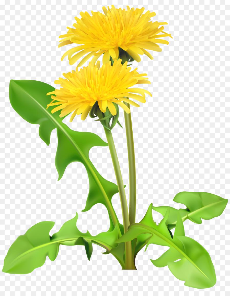 dandelion flower clip art - dandelion png download - 4730*6000