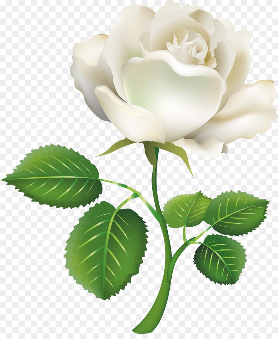 Rosa Blanco, Clip art - las rosas blancas Formatos De Archivo De ...