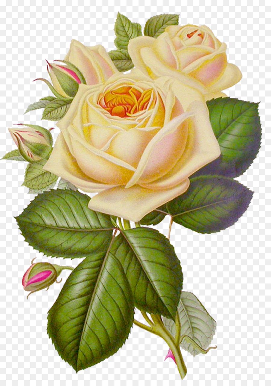 Rose flower desktop wallpaper clip art white roses png download rose flower desktop wallpaper clip art white roses mightylinksfo
