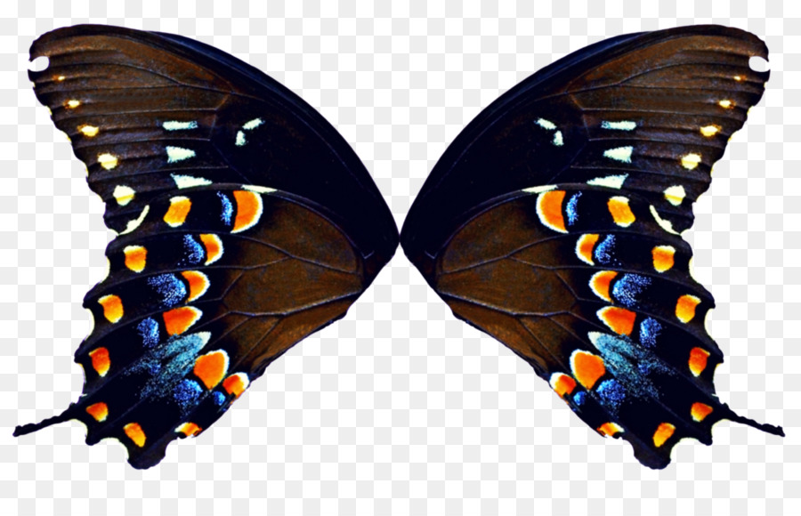 Butterfly Butterfly png download - 1123*711 - Free Transparent