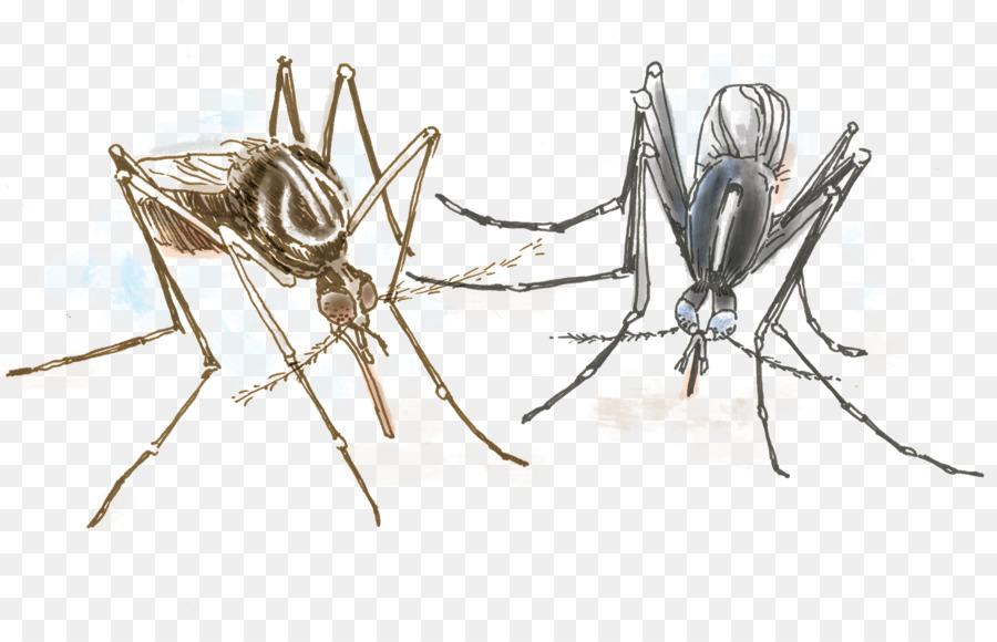 Aedes albopictus zanzara della febbre Gialla Insetti