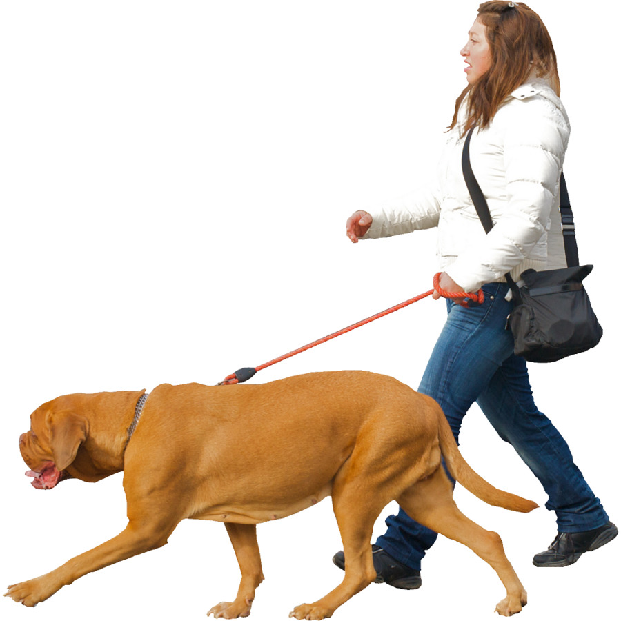 E Collar Training For Aggressive Dogs