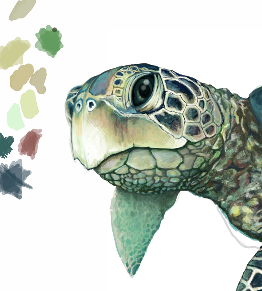 green sea turtle drawing turtle png download 14411600
