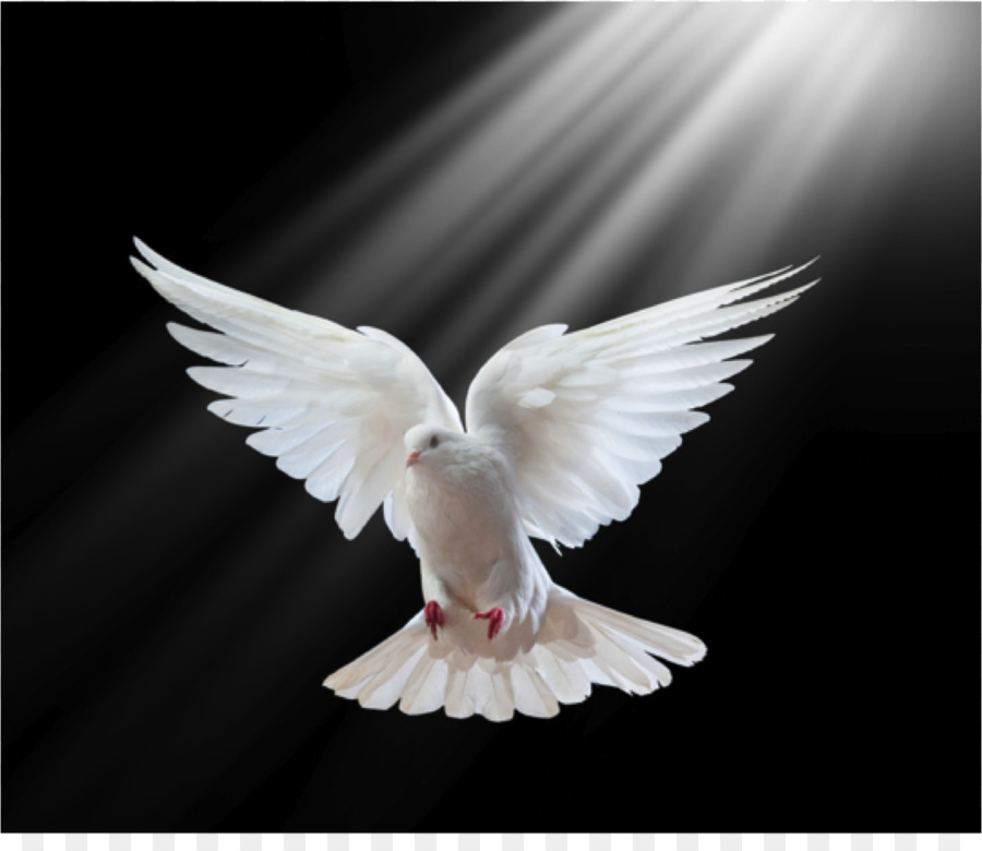 Columbidae Holy Spirit In Christianity Doves As Symbols Pigeon Png