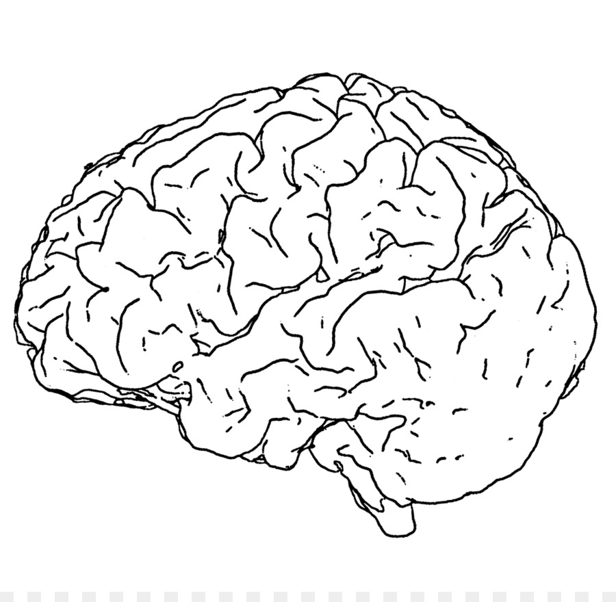 Human Brain Line Art Drawing Black And White Brain Png Download