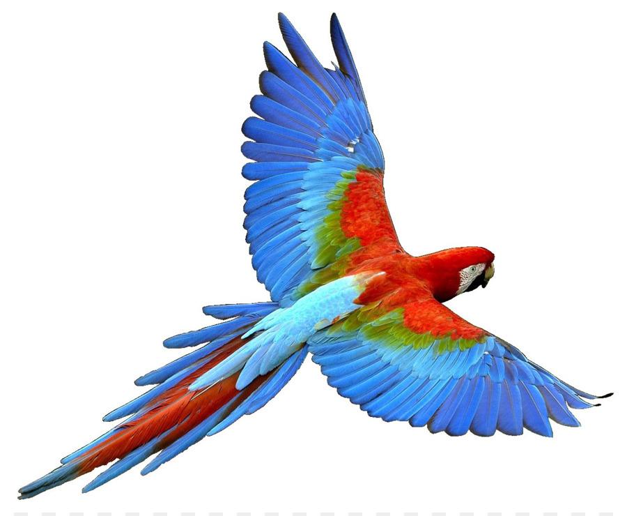 parrot bird flight cockatiel clip art parrot png download 1286 rh kisspng com macaw clip art free macaw parrot clipart
