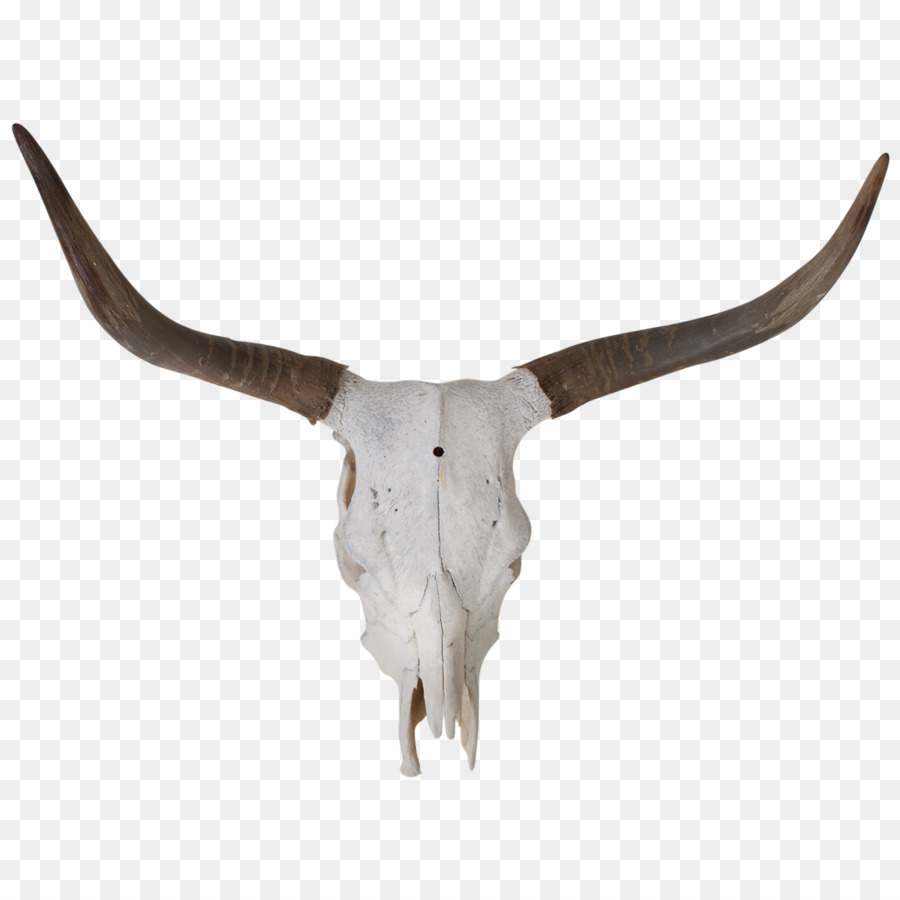 Texas Longhorn Bull Skull Bone Longhorn Png Download 12001200