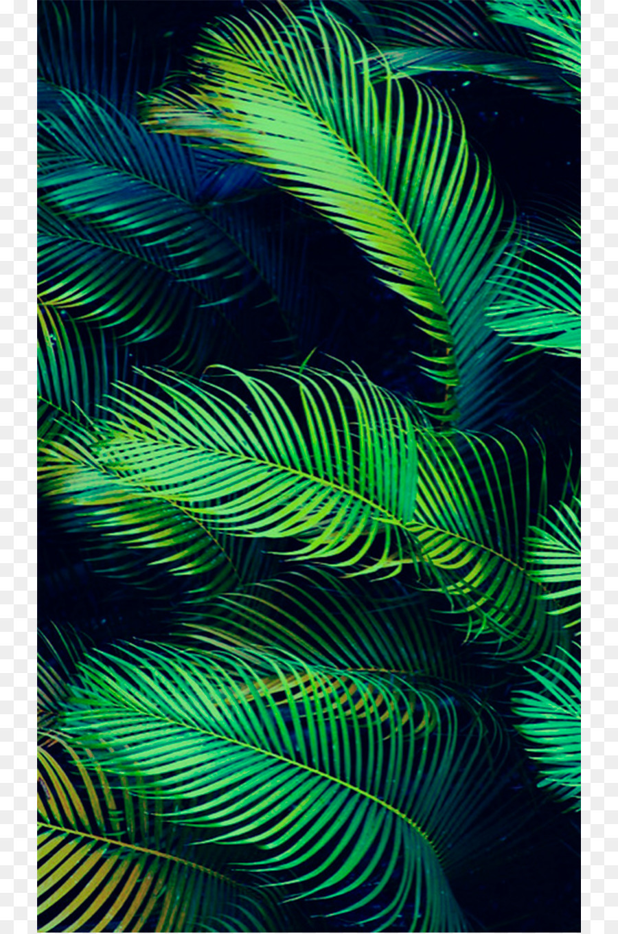 Arecaceae Leaf Palm Branch Tropics Wallpaper