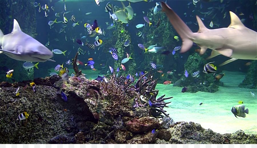 Aquarium video lwp for android apk download.