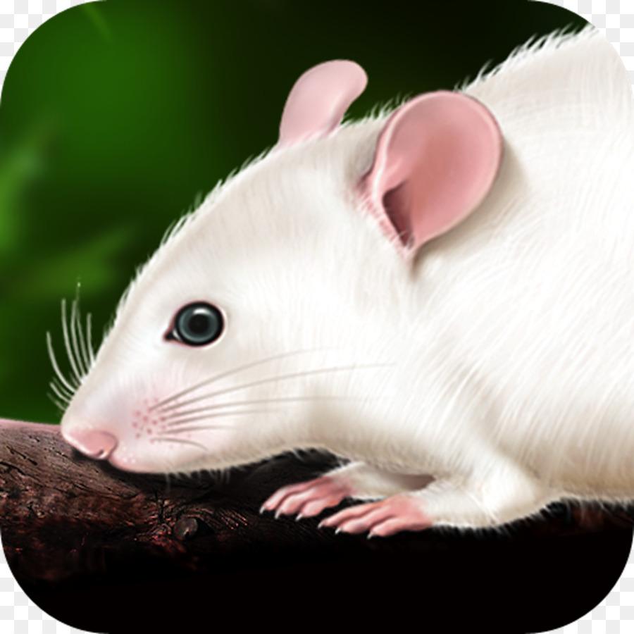 Rata Discipulos Ratón Disección De Anatomía - Rata Y Ratón Formatos ...