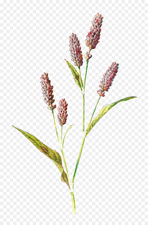 Familiar Flores Silvestres Botánica de flores Silvestres de la ...