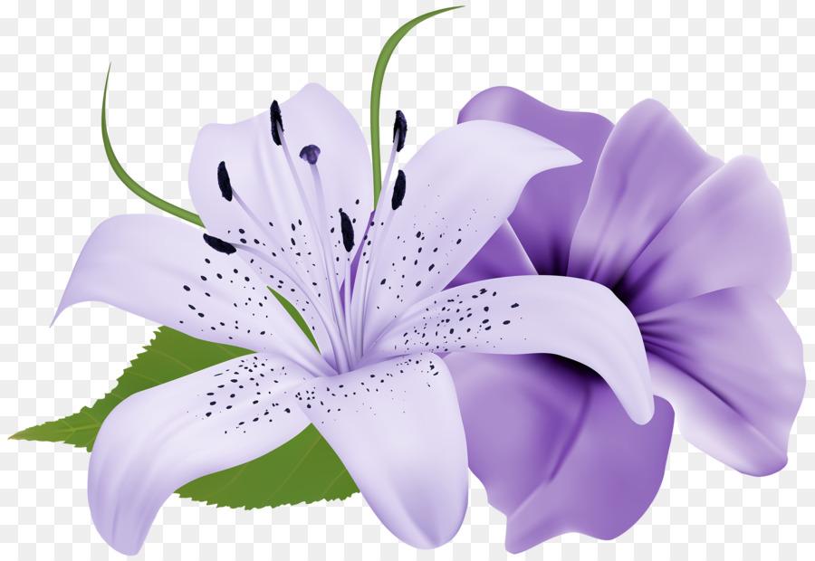 Flower purple lilium clip art white flower png download 2500 flower purple lilium clip art white flower mightylinksfo