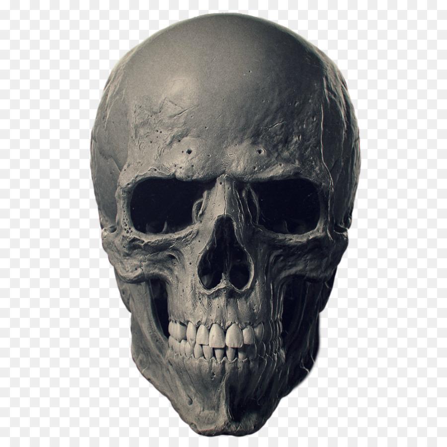 Animal Skulls Bone Human skeleton - skulls png download - 1200*1200 ...