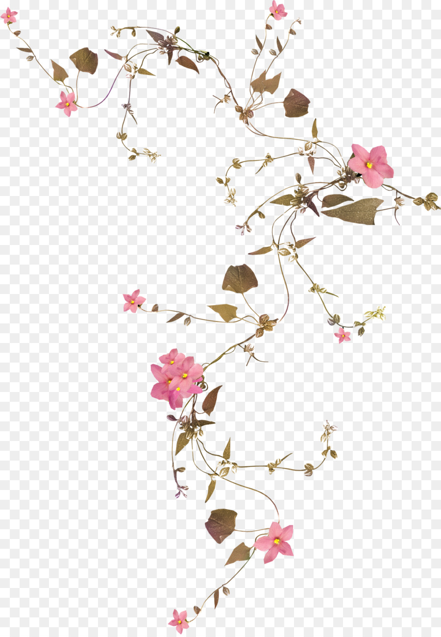 Flower Vine Rose Drawing Botanical Png Download 11821701 Free