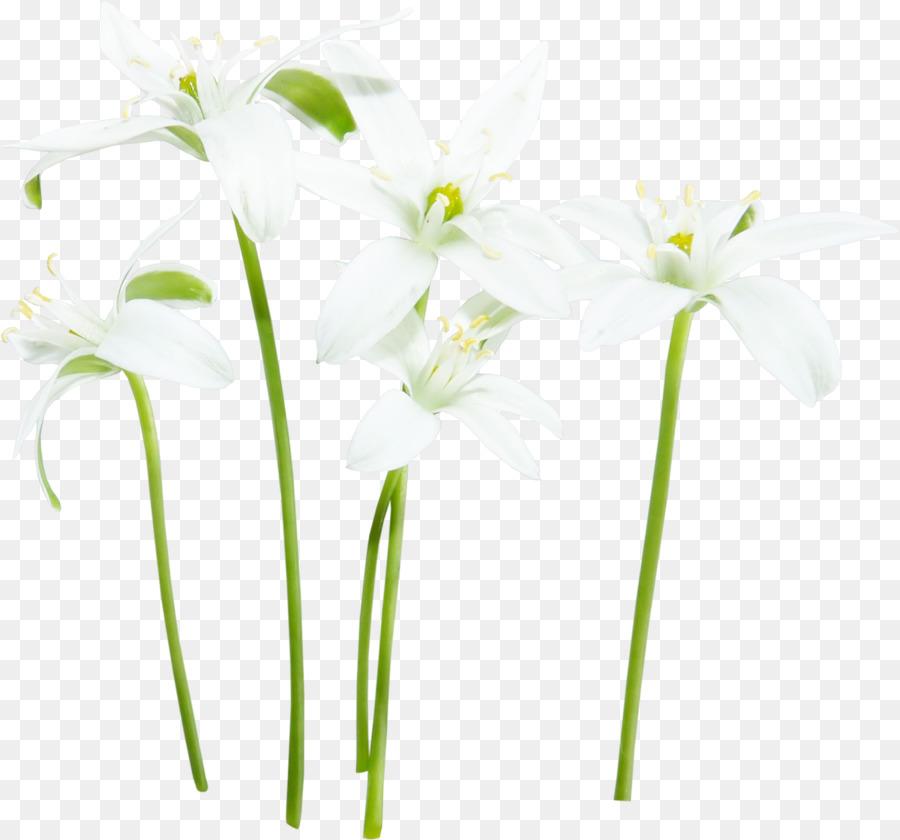 Flower White Fleur Blanche White Flower Png Download 1200 1120