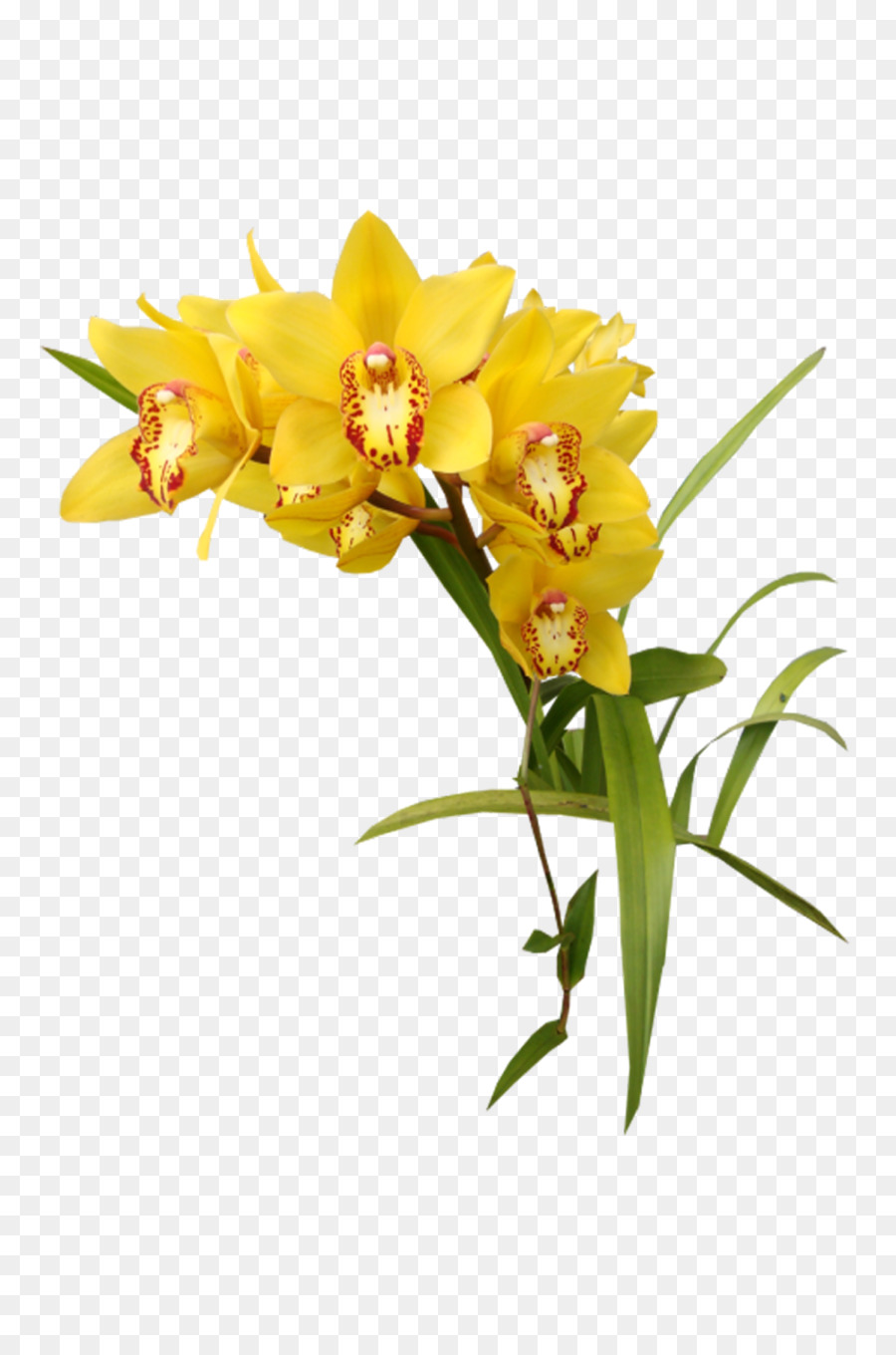 flower yellow orchids clip art - orchid png download - 1066 1600