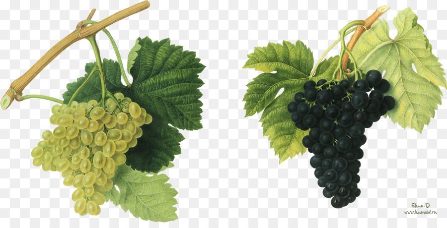 Red Wine Common Grape Vine Vintage