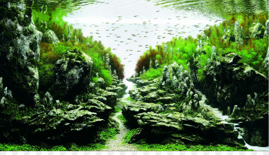 ADA Malaysia Aquascaping Aquatic Plants Aquarium Competition   Aquarium