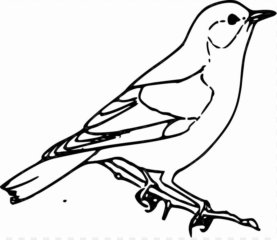 Gorrión Pájaro Dibujo Clip art - Codorniz png dibujo - Transparente ...